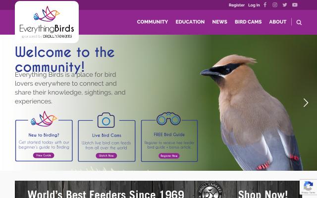 everythingbirds.com